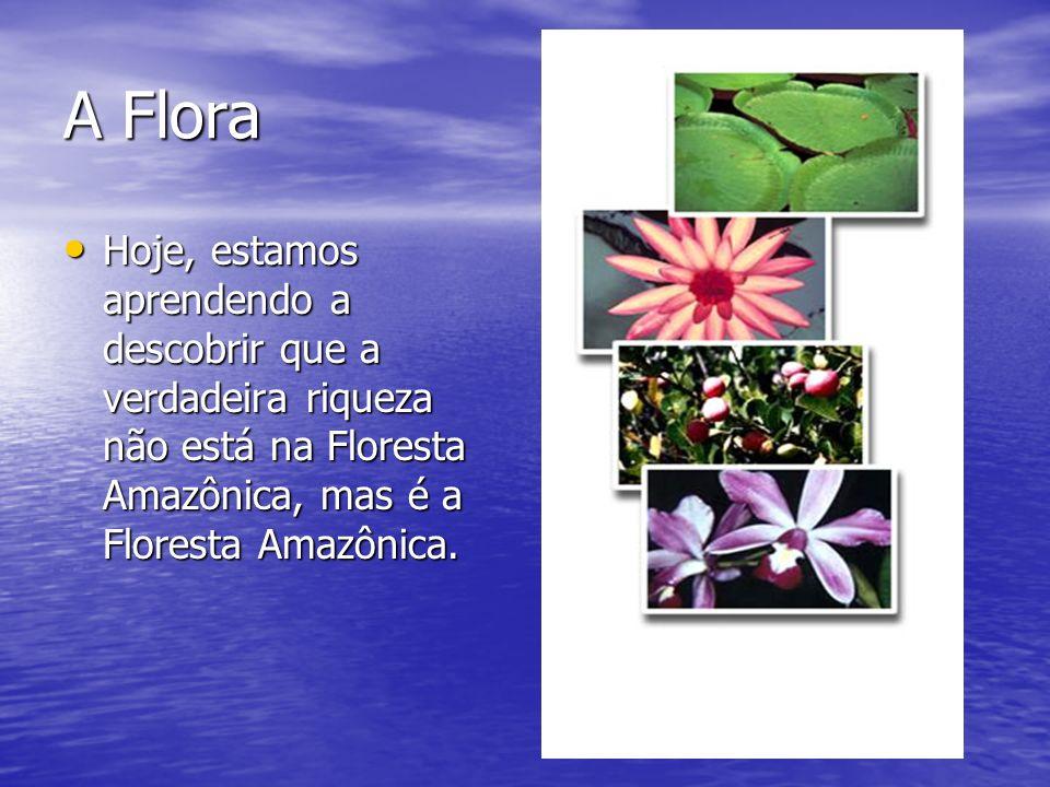 A Flora Hoje, estamos aprendendo a descobrir que a verdadeira riqueza não está na Floresta Amazônica, mas é a Floresta Amazônica. Hoje, estamos aprend
