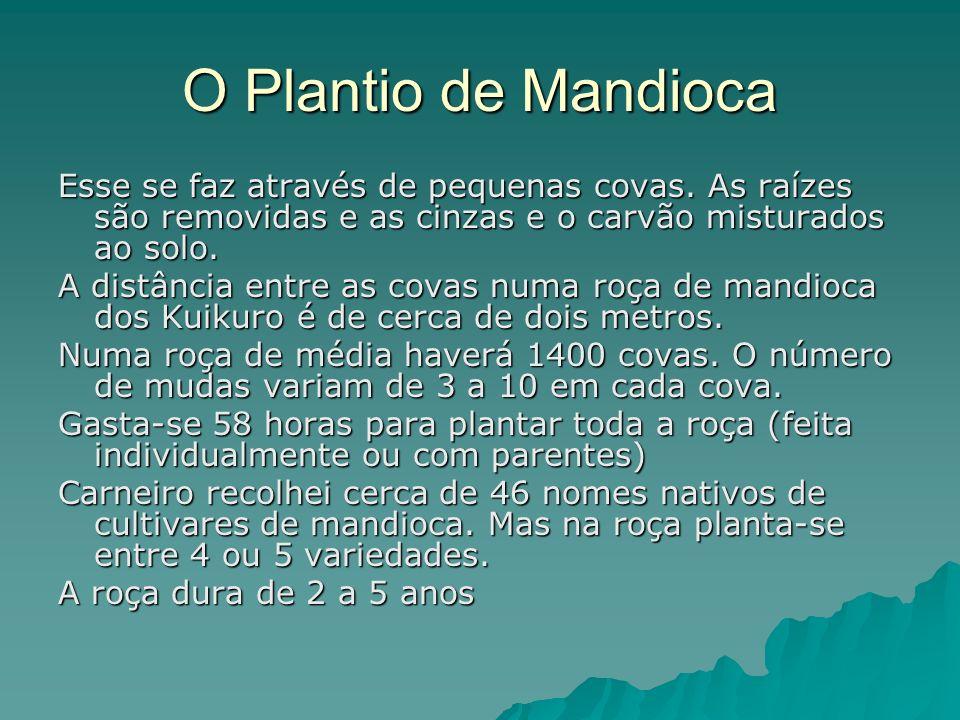 O Plantio de Mandioca Esse se faz através de pequenas covas. As raízes são removidas e as cinzas e o carvão misturados ao solo. A distância entre as c