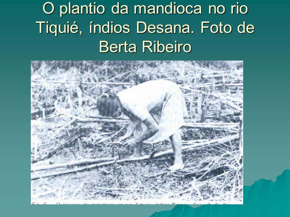 O plantio da mandioca no rio Tiquié, índios Desana. Foto de Berta Ribeiro