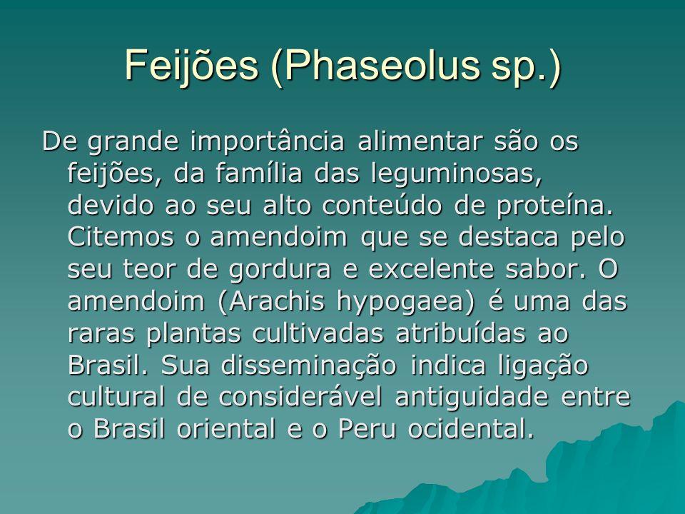 Feijões (Phaseolus sp.) De grande importância alimentar são os feijões, da família das leguminosas, devido ao seu alto conteúdo de proteína.