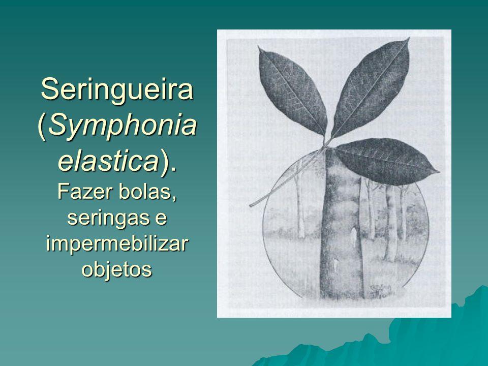 Seringueira (Symphonia elastica). Fazer bolas, seringas e impermebilizar objetos