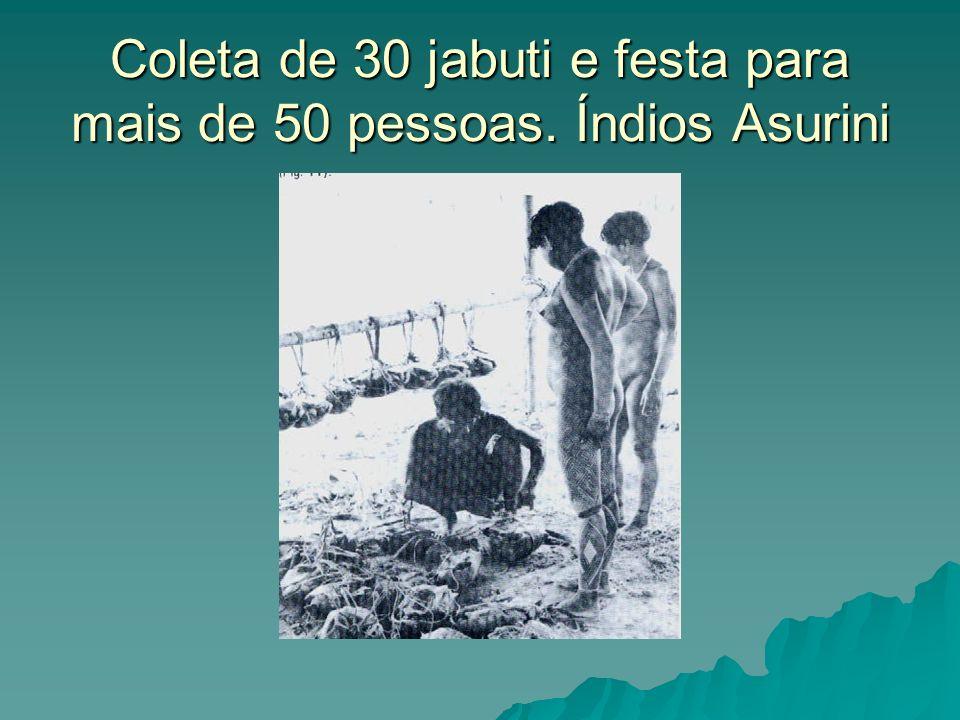 Coleta de 30 jabuti e festa para mais de 50 pessoas. Índios Asurini