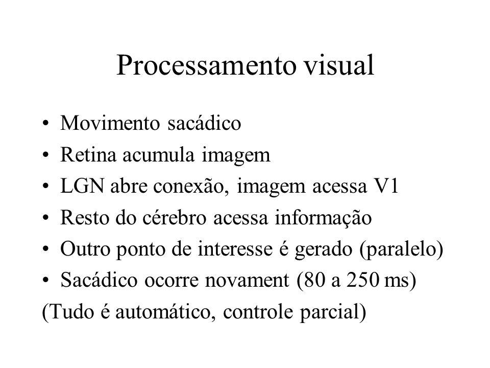 Processamento visual Movimento sacádico Retina acumula imagem LGN abre conexão, imagem acessa V1 Resto do cérebro acessa informação Outro ponto de int