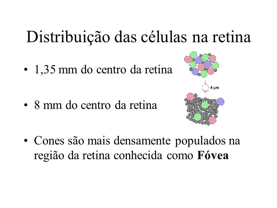 Distribuição das células na retina 1,35 mm do centro da retina 8 mm do centro da retina Cones são mais densamente populados na região da retina conhecida como Fóvea