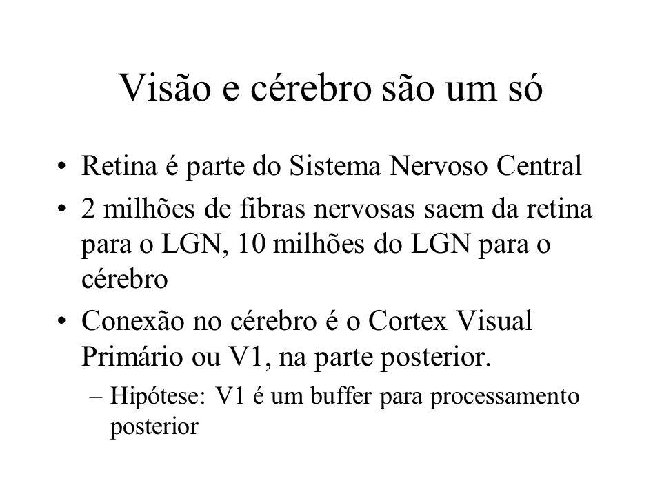 Visão e cérebro são um só Retina é parte do Sistema Nervoso Central 2 milhões de fibras nervosas saem da retina para o LGN, 10 milhões do LGN para o cérebro Conexão no cérebro é o Cortex Visual Primário ou V1, na parte posterior.