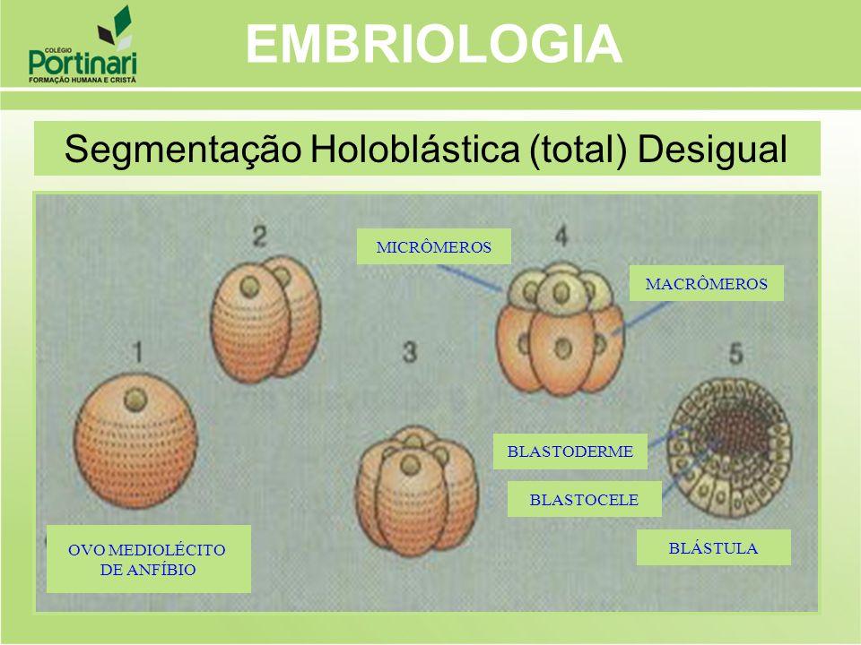 MICRÔMEROS MACRÔMEROS BLÁSTULA BLASTODERME BLASTOCELE OVO MEDIOLÉCITO DE ANFÍBIO EMBRIOLOGIA Segmentação Holoblástica (total) Desigual