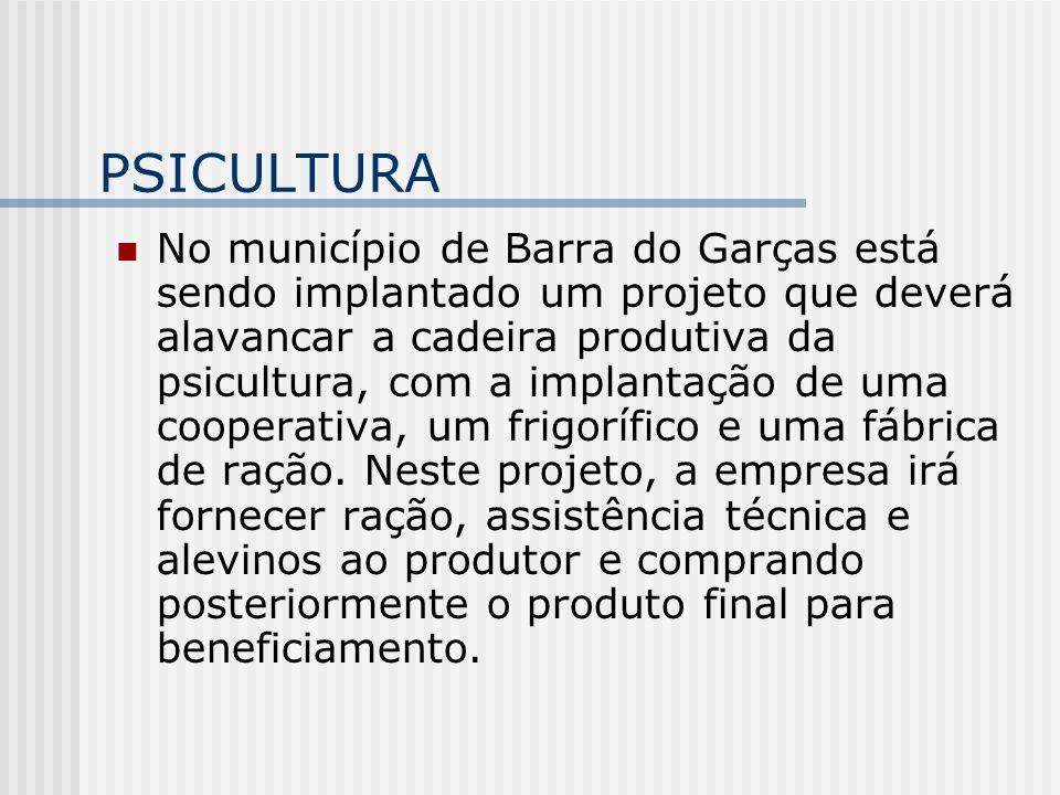 PSICULTURA No município de Barra do Garças está sendo implantado um projeto que deverá alavancar a cadeira produtiva da psicultura, com a implantação