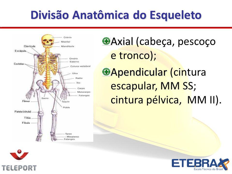 Divisão Anatômica do Esqueleto Axial Axial (cabeça, pescoço e tronco); Apendicular Apendicular (cintura escapular, MM SS; cintura pélvica, MM II).