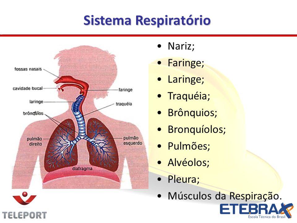 Sistema Respiratório Nariz; Faringe; Laringe; Traquéia; Brônquios; Bronquíolos; Pulmões; Alvéolos; Pleura; Músculos da Respiração.