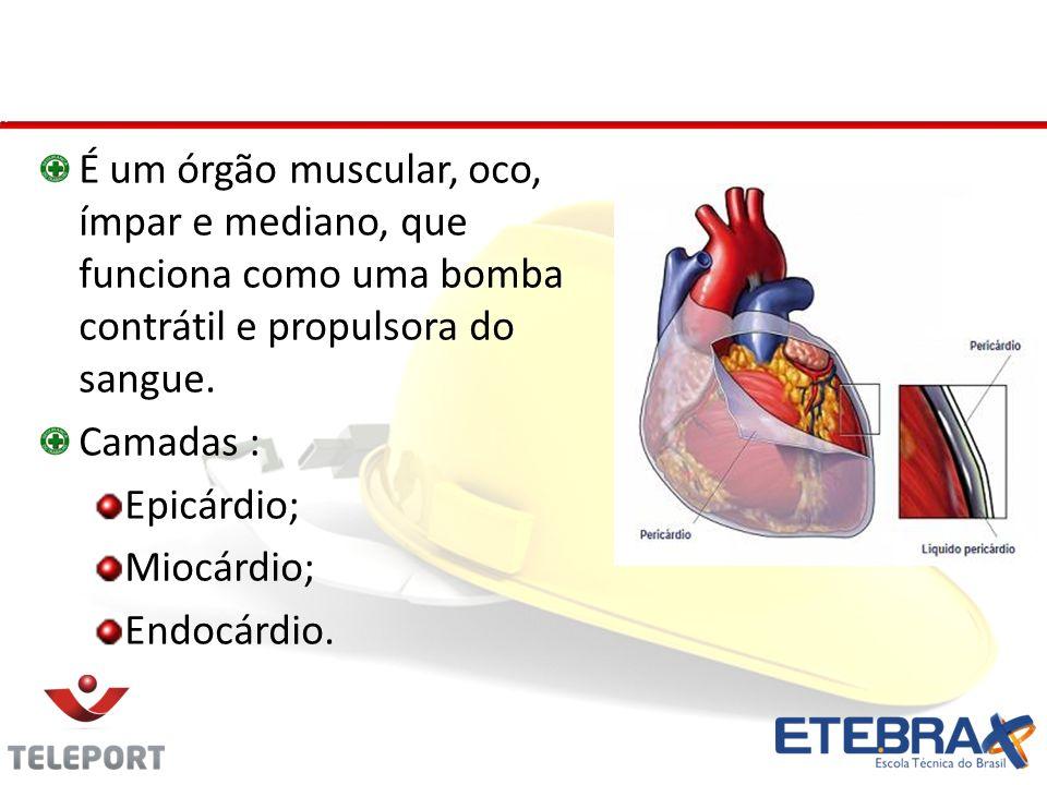 Coração - Camadas É um órgão muscular, oco, ímpar e mediano, que funciona como uma bomba contrátil e propulsora do sangue.