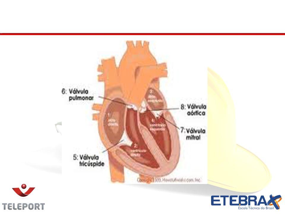 Coração - Cavidades