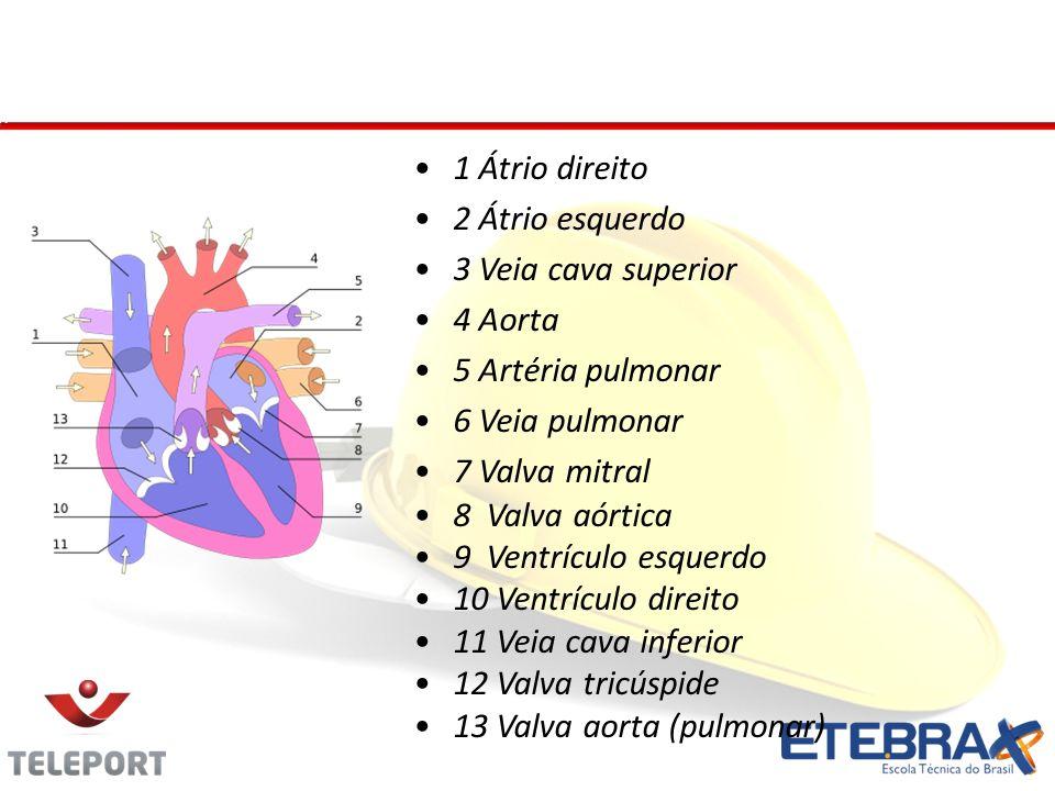 Coração - Anexos 1 Átrio direito 2 Átrio esquerdo 3 Veia cava superior 4 Aorta 5 Artéria pulmonar 6 Veia pulmonar 7 Valva mitral 8 Valva aórtica 9 Ventrículo esquerdo 10 Ventrículo direito 11 Veia cava inferior 12 Valva tricúspide 13 Valva aorta (pulmonar)