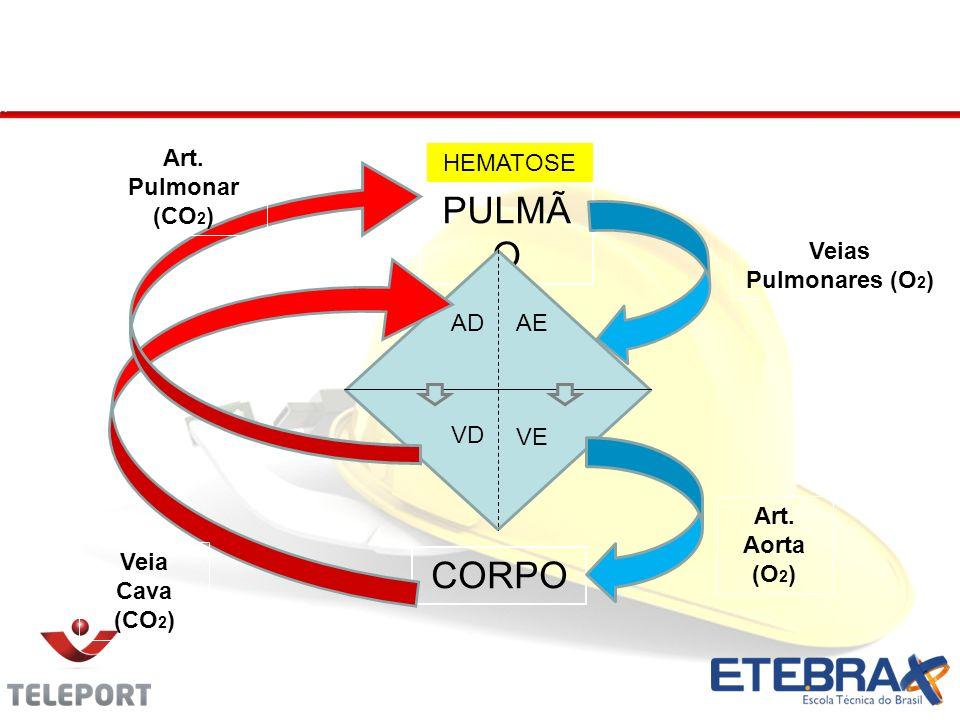 Circulação Sistêmica e Pulmonar PULMÃ O CORPO AEAD VE VD Veias Pulmonares (O 2 ) Art.