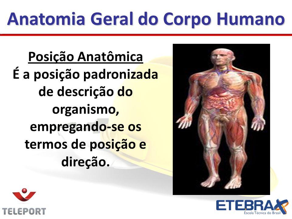 Anatomia Geral do Corpo Humano Posição Anatômica É a posição padronizada de descrição do organismo, empregando-se os termos de posição e direção.