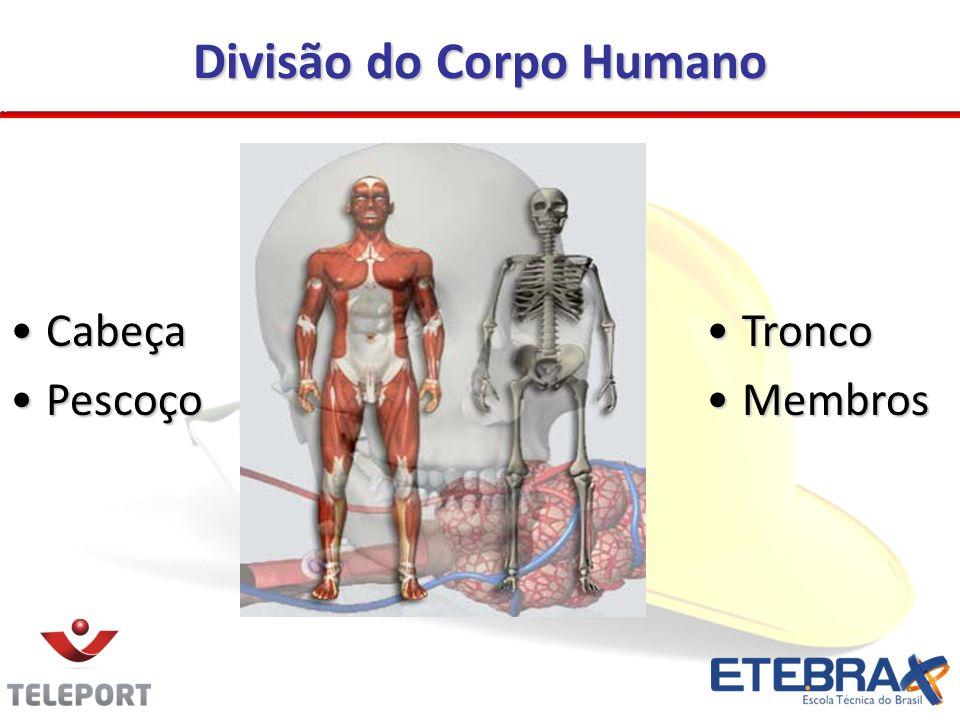 Divisão do Corpo Humano TroncoTronco MembrosMembros CabeçaCabeça PescoçoPescoço