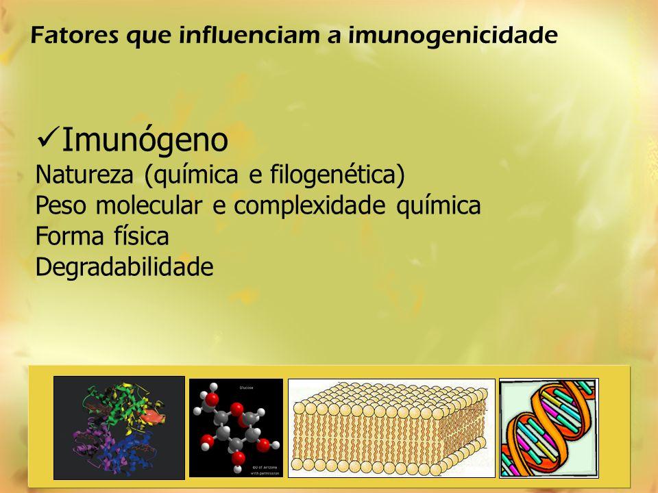 Imunógeno Natureza (química e filogenética) Peso molecular e complexidade química Forma física Degradabilidade Fatores que influenciam a imunogenicida