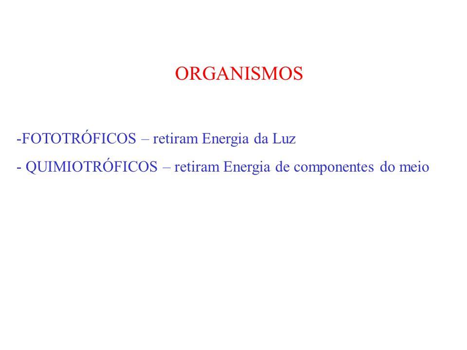 ORGANISMOS -FOTOTRÓFICOS – retiram Energia da Luz - QUIMIOTRÓFICOS – retiram Energia de componentes do meio