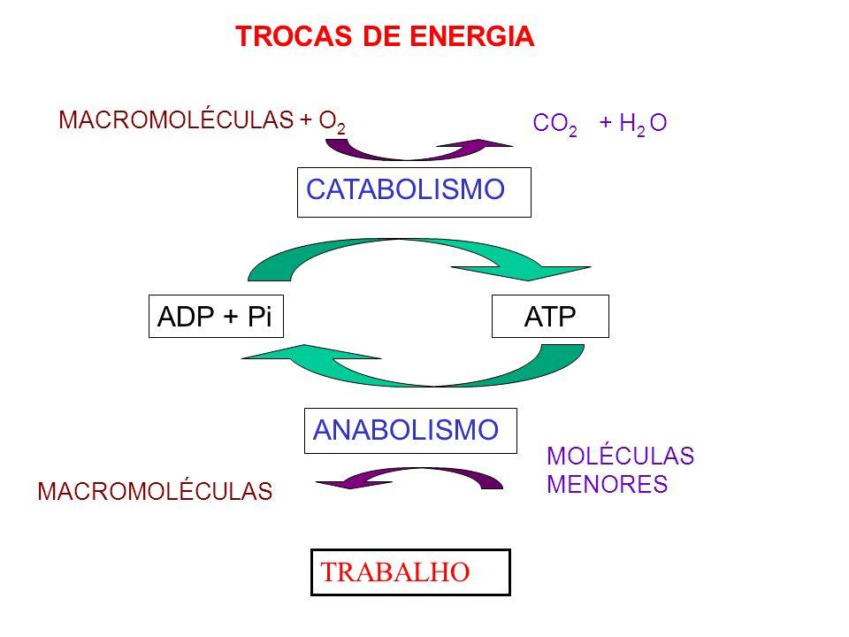 REAÇÕES DE ÓXIDO REDUÇÃO MACROMOLÉCULAS (REDUZIDAS) + O 2 CO 2 (OXIDADO) + H 2 O CATABOLISMO Transportador oxidado (NAD+; FAD) Transportador reduzido (NADH; FADH 2 ) MOLÉCULAS MENORES (OXIDADAS) MACROMOLÉCULAS (REDUZIDAS) ANABOLISMO