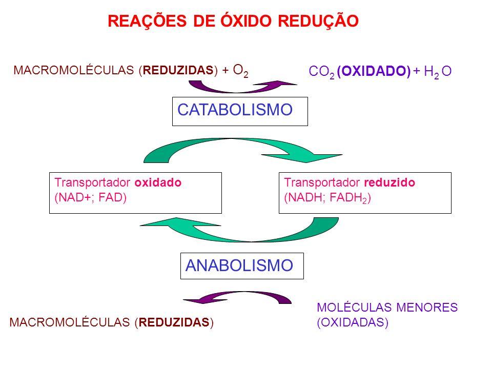 REAÇÕES DE ÓXIDO REDUÇÃO MACROMOLÉCULAS (REDUZIDAS) + O 2 CO 2 (OXIDADO) + H 2 O CATABOLISMO Transportador oxidado (NAD+; FAD) Transportador reduzido