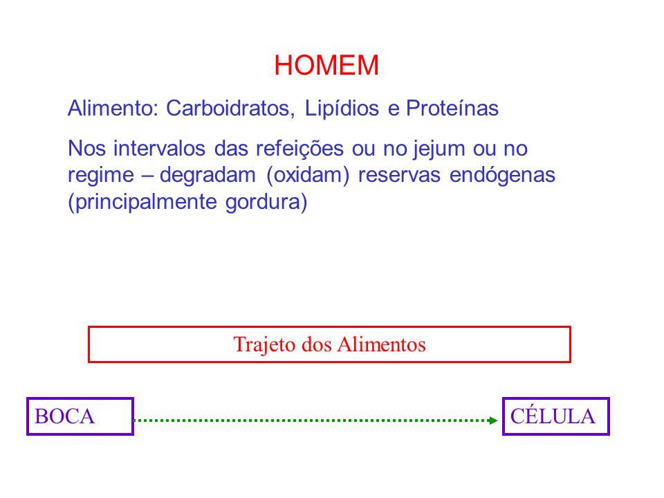 HOMEM Alimento: Carboidratos, Lipídios e Proteínas Nos intervalos das refeições ou no jejum ou no regime – degradam (oxidam) reservas endógenas (princ