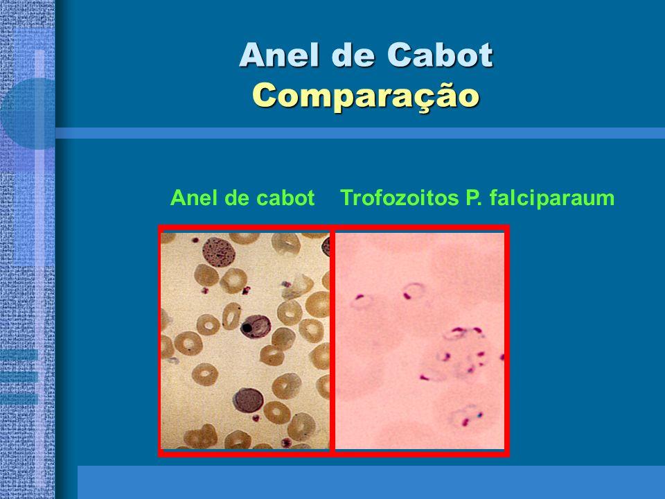 Anel de Cabot Comparação Anel de cabot Trofozoitos P. falciparaum