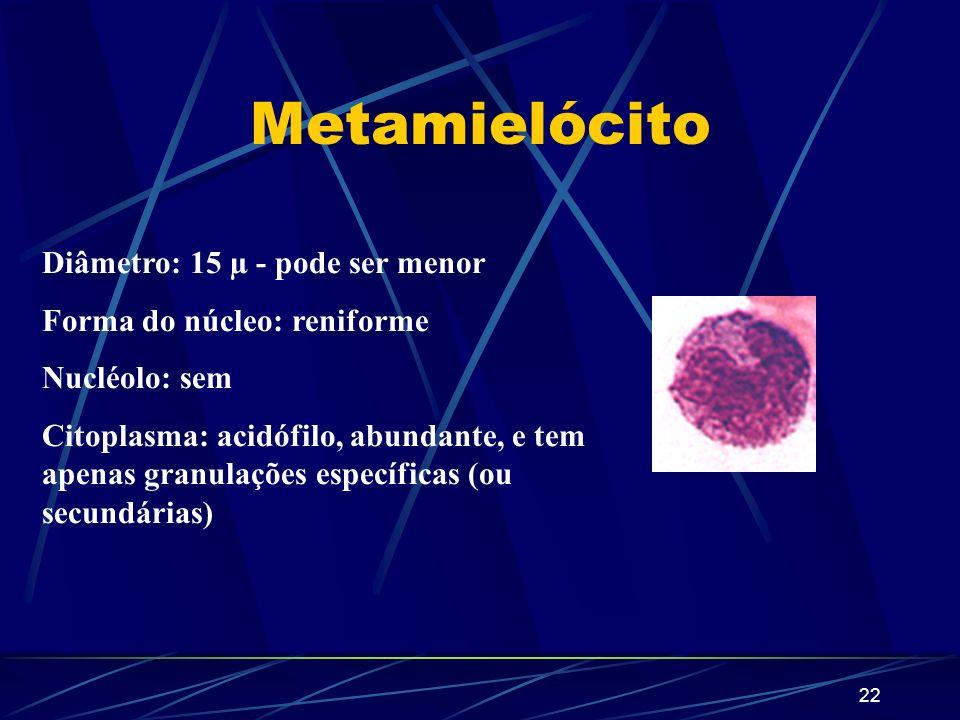 21 1 1 2 3 Identifique os blastos, de acordo com o número. Mieloblasto Promielócito Mielócito