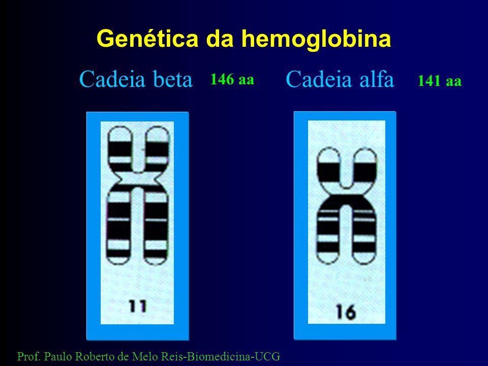 Genética da hemoglobina Cadeia beta Cadeia alfa 141 aa 146 aa Prof.