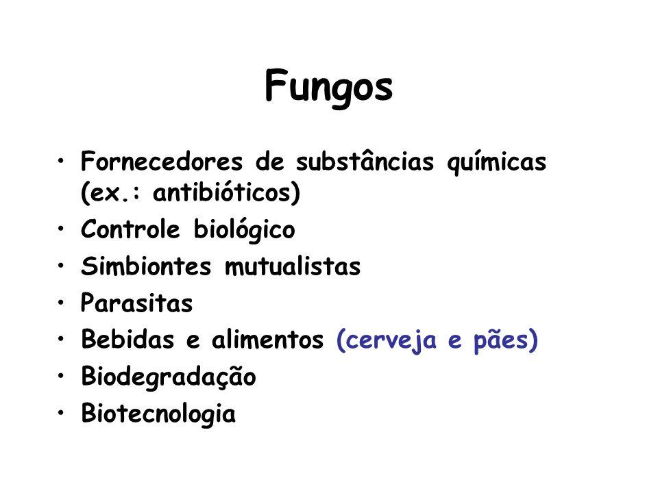 Fungos Fornecedores de substâncias químicas (ex.: antibióticos) Controle biológico Simbiontes mutualistas Parasitas Bebidas e alimentos (cerveja e pãe