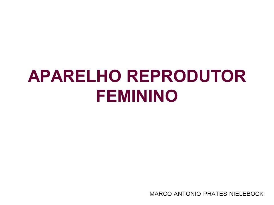 APARELHO REPRODUTOR FEMININO MARCO ANTONIO PRATES NIELEBOCK