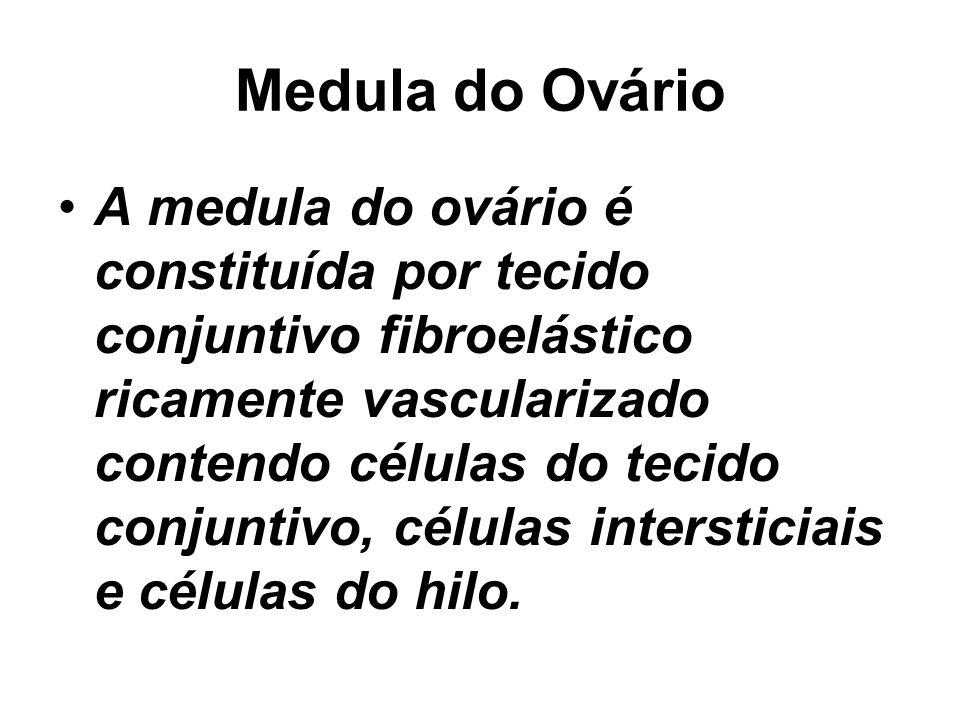Medula do Ovário A medula do ovário é constituída por tecido conjuntivo fibroelástico ricamente vascularizado contendo células do tecido conjuntivo, células intersticiais e células do hilo.