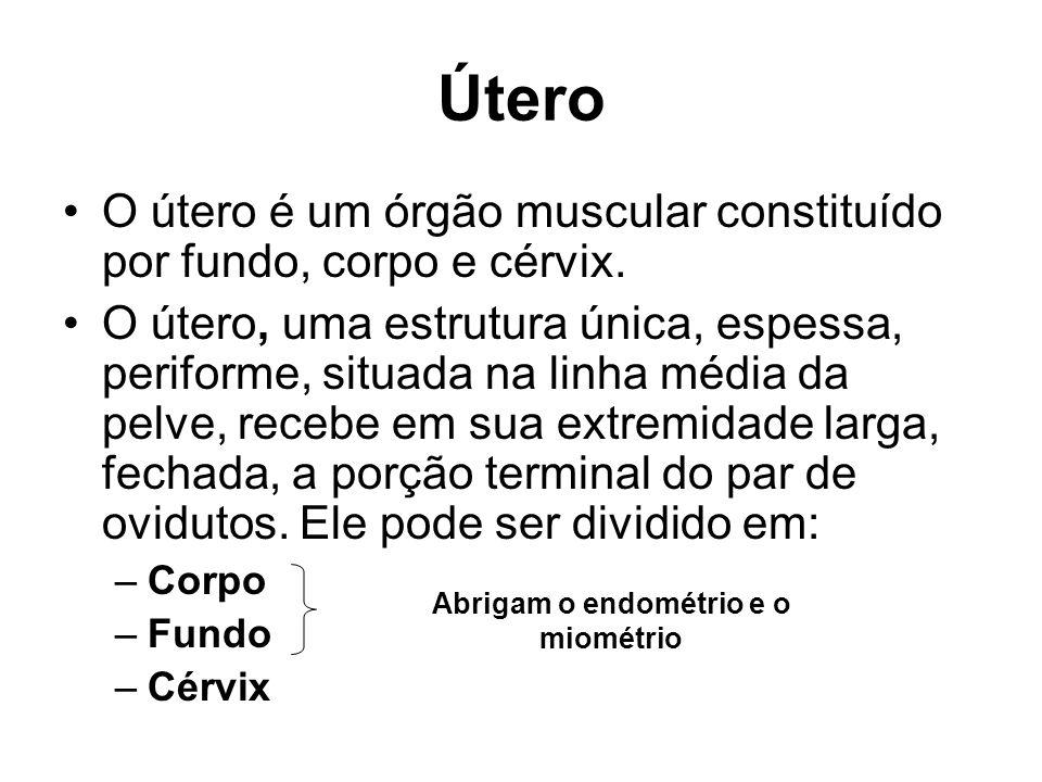 Útero O útero é um órgão muscular constituído por fundo, corpo e cérvix.