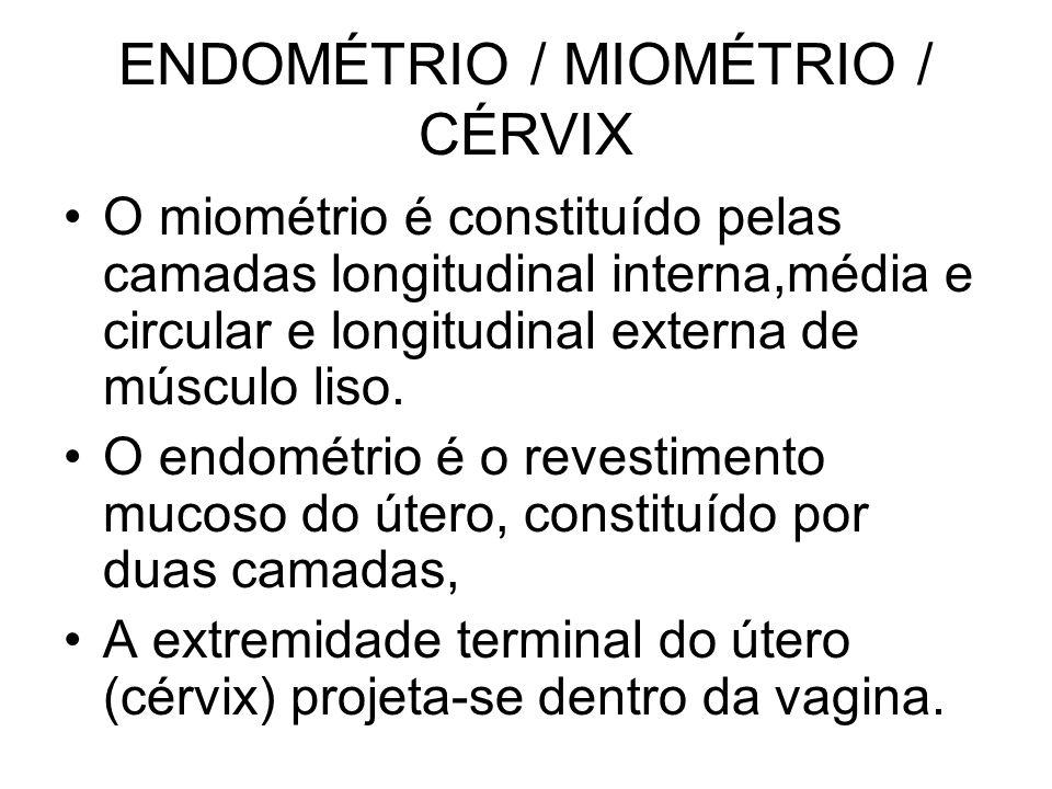 ENDOMÉTRIO / MIOMÉTRIO / CÉRVIX O miométrio é constituído pelas camadas longitudinal interna,média e circular e longitudinal externa de músculo liso.