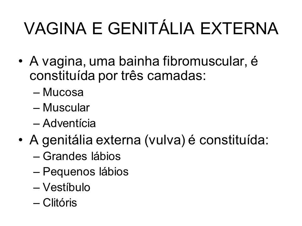 VAGINA E GENITÁLIA EXTERNA A vagina, uma bainha fibromuscular, é constituída por três camadas: –Mucosa –Muscular –Adventícia A genitália externa (vulva) é constituída: –Grandes lábios –Pequenos lábios –Vestíbulo –Clitóris