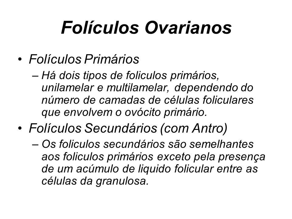 Folículos Ovarianos Folículos Primários –Há dois tipos de foliculos primários, unilamelar e multilamelar, dependendo do número de camadas de células foliculares que envolvem o ovócito primário.