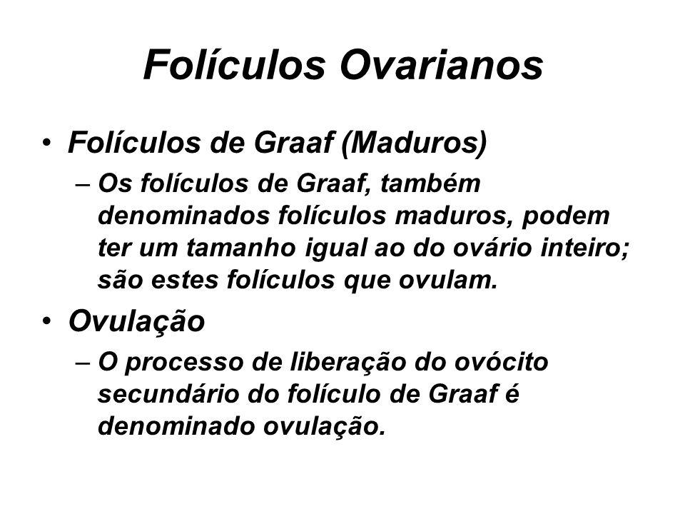 Folículos Ovarianos Folículos de Graaf (Maduros) –Os folículos de Graaf, também denominados folículos maduros, podem ter um tamanho igual ao do ovário inteiro; são estes folículos que ovulam.