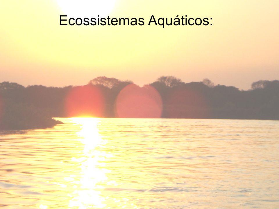 Estuário: Região onde os rios desembocam nos mares, são ambientes de transição (ECÓTONO).