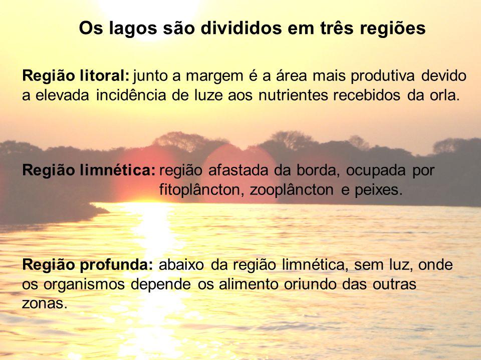 Região profunda: abaixo da região limnética, sem luz, onde os organismos depende os alimento oriundo das outras zonas. Os lagos são divididos em três