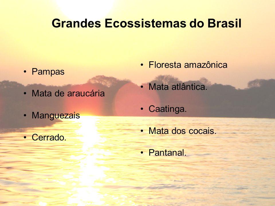 Pampas Mata de araucária Manguezais Cerrado. Grandes Ecossistemas do Brasil Floresta amazônica Mata atlântica. Caatinga. Mata dos cocais. Pantanal.
