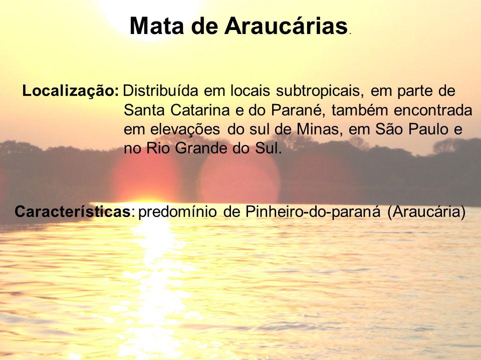 Características: predomínio de Pinheiro-do-paraná (Araucária) Mata de Araucárias. Localização: Distribuída em locais subtropicais, em parte de Santa C