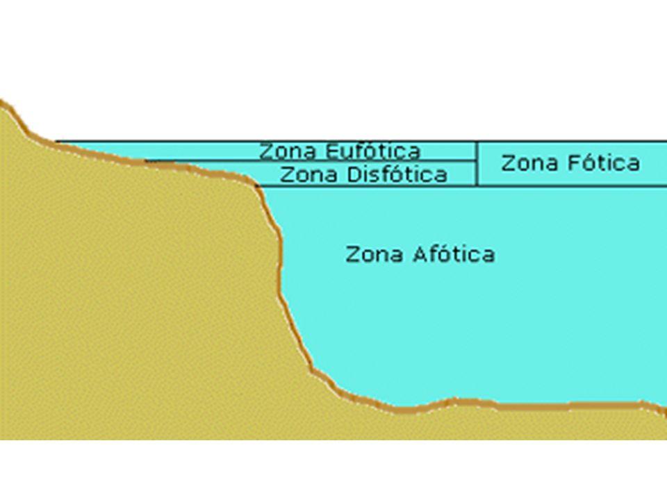 Ecossistemas marinhos: Luz, concentração de oxigênio e nutrientes são fatores que sofrem maior variação.