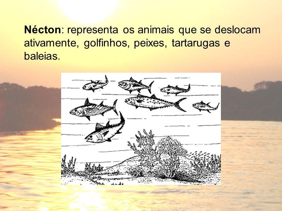 Nécton: representa os animais que se deslocam ativamente, golfinhos, peixes, tartarugas e baleias.