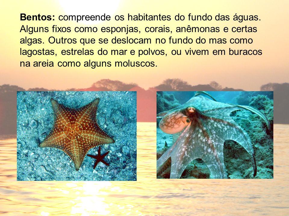 Bentos: compreende os habitantes do fundo das águas. Alguns fixos como esponjas, corais, anêmonas e certas algas. Outros que se deslocam no fundo do m