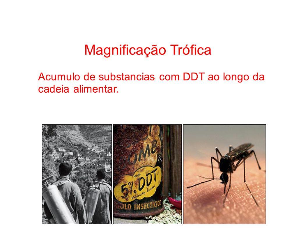 Magnificação Trófica. Acumulo de substancias com DDT ao longo da cadeia alimentar.