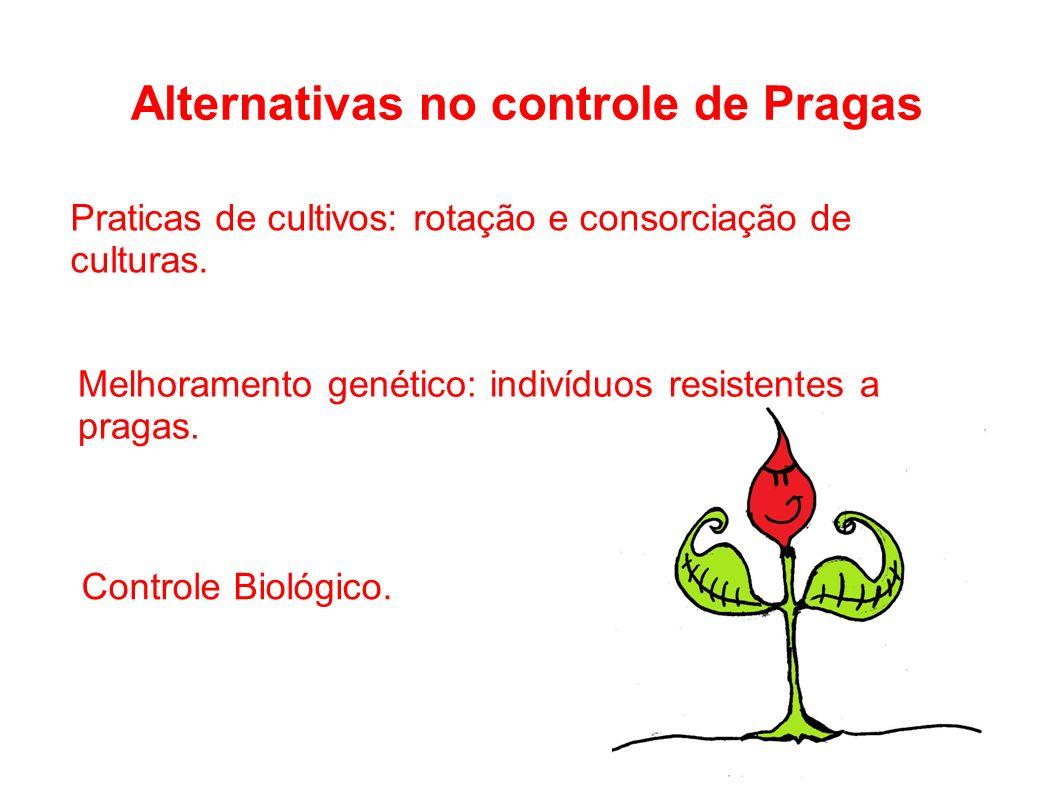 Alternativas no controle de Pragas Praticas de cultivos: rotação e consorciação de culturas. Melhoramento genético: indivíduos resistentes a pragas. C