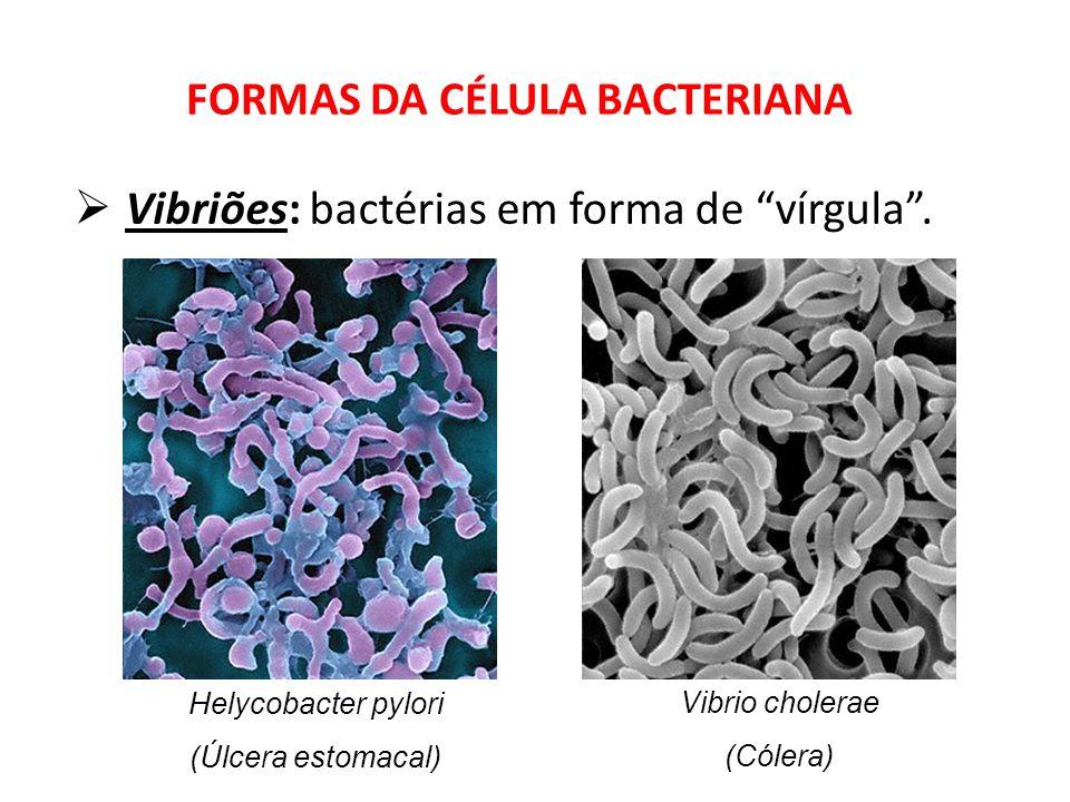 Vibriões: bactérias em forma de vírgula. FORMAS DA CÉLULA BACTERIANA Helycobacter pylori (Úlcera estomacal) Vibrio cholerae (Cólera)