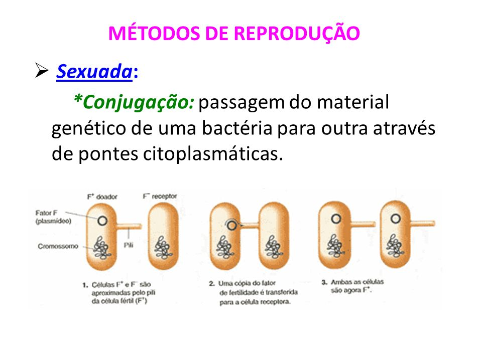 Sexuada: *Conjugação: passagem do material genético de uma bactéria para outra através de pontes citoplasmáticas. MÉTODOS DE REPRODUÇÃO