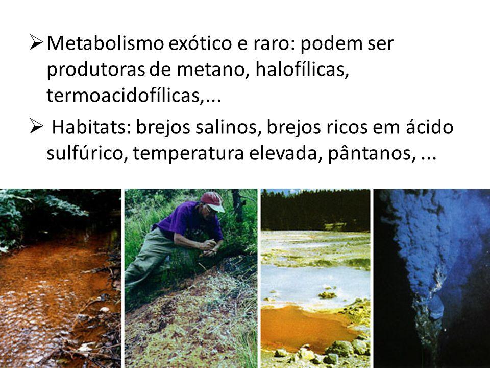 Metabolismo exótico e raro: podem ser produtoras de metano, halofílicas, termoacidofílicas,... Habitats: brejos salinos, brejos ricos em ácido sulfúri