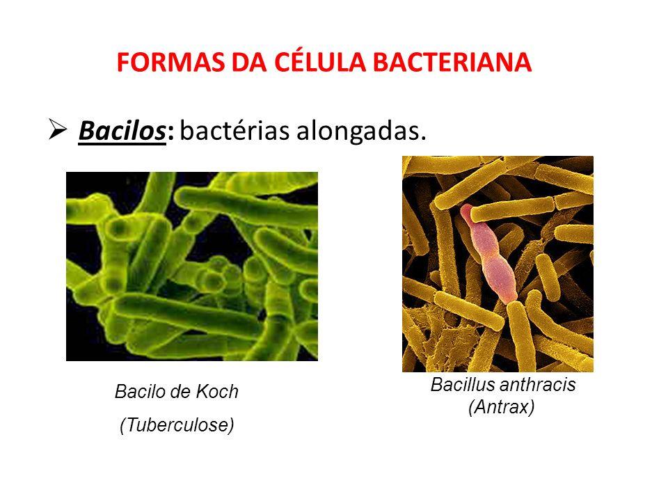 Bacilos: bactérias alongadas. FORMAS DA CÉLULA BACTERIANA Bacilo de Koch (Tuberculose) Bacillus anthracis (Antrax)