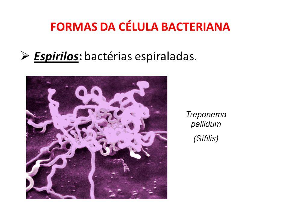 Vibriões: bactérias em forma de vírgula.