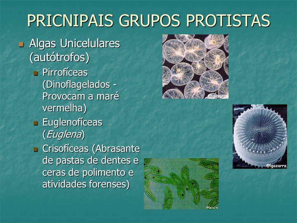 PRICNIPAIS GRUPOS PROTISTAS Algas Unicelulares (autótrofos) Algas Unicelulares (autótrofos) Pirrofíceas (Dinoflagelados - Provocam a maré vermelha) Pirrofíceas (Dinoflagelados - Provocam a maré vermelha) Euglenofíceas (Euglena) Euglenofíceas (Euglena) Crisofíceas (Abrasante de pastas de dentes e ceras de polimento e atividades forenses) Crisofíceas (Abrasante de pastas de dentes e ceras de polimento e atividades forenses)